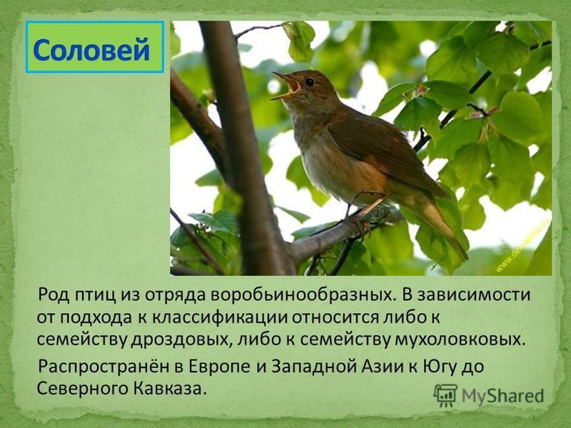 Род птиц из отряда воробьинообразных. В зависимости от подхода к классификации относится либо к семейству дроздовых, либо к семейству мухоловковых. Распространён в Европе и Западной Азии к Югу до Северного Кавказа.