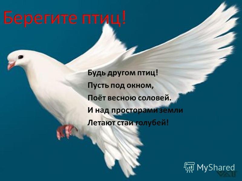 Будь другом птиц! Пусть под окном, Поёт весною соловей. И над просторами земли Летают стаи голубей!