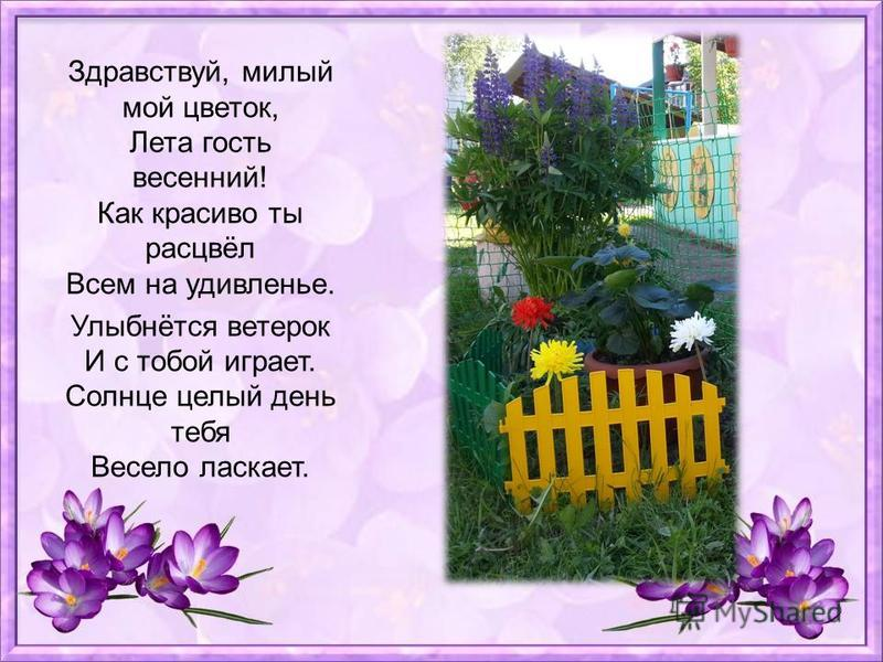 Здравствуй, милый мой цветок, Лета гость весенний! Как красиво ты расцвёл Всем на удивленье. Улыбнётся ветерок И с тобой играет. Солнце целый день тебя Весело ласкает.