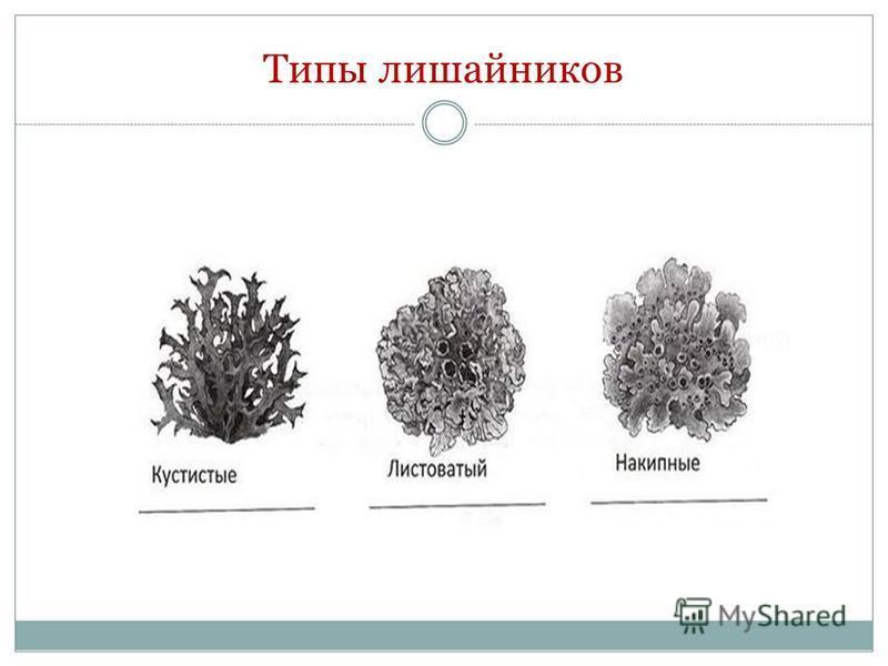 Типы лишайников
