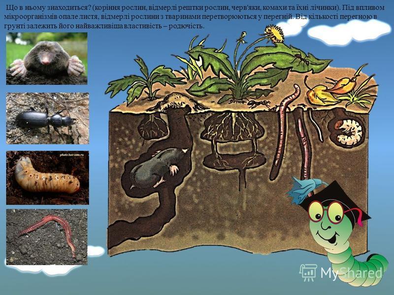 Грунт – це верхній пухкий шар землі, на якому ростуть рослини. У нижній частині грунт поступово світлішає. Під шаром грунту залягає шар піску, глини і каміння