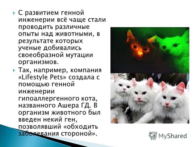 С развитием генной инженерии всё чаще стали проводить различные опыты над животными, в результате которых ученые добивались своеобразной мутации организмов. Так, например, компания «Lifestyle Pets» создала с помощью генной инженерии гипоаллергенного