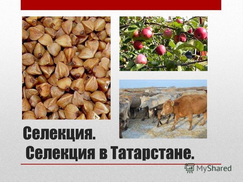 Селекция. Селекция в Татарстане.