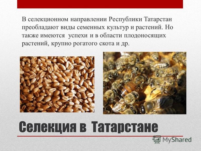 В селекционном направлении Республики Татарстан преобладают виды семенных культур и растений. Но также имеются успехи и в области плодоносящих растений, крупно рогатого скота и др. Селекция в Татарстане