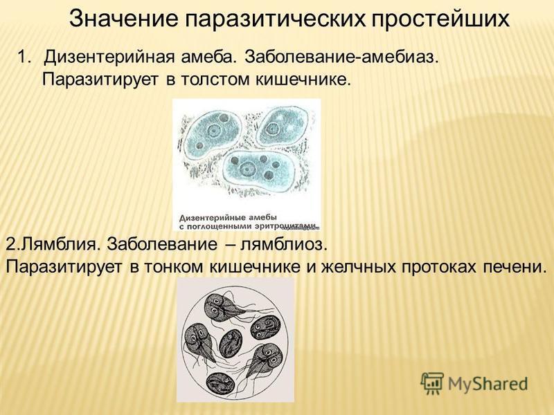 лечение лямблиоза фуразолидоном схема