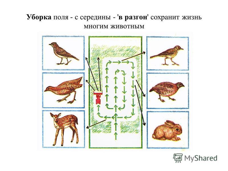 Уборка поля - с середины - 'в разгон' сохранит жизнь многим животным