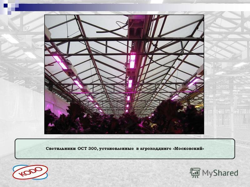 Светильники ОСТ 300, установленные в агроходдинге «Московский»