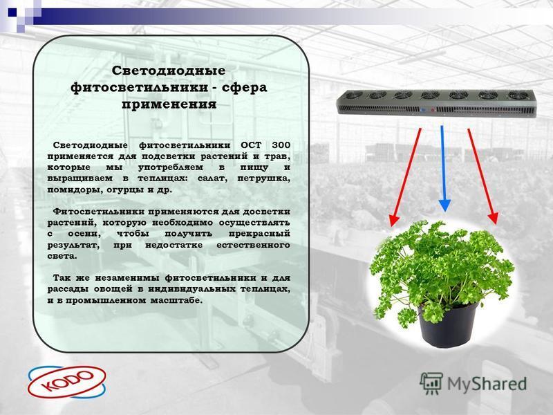Светодиодные фитосветильники - сфера применения Светодиодные фитосветильники ОСТ 300 применяется для подсветки растений и трав, которые мы употребляем в пищу и выращиваем в теплицах: салат, петрушка, помидоры, огурцы и др. Фитосветильники применяются