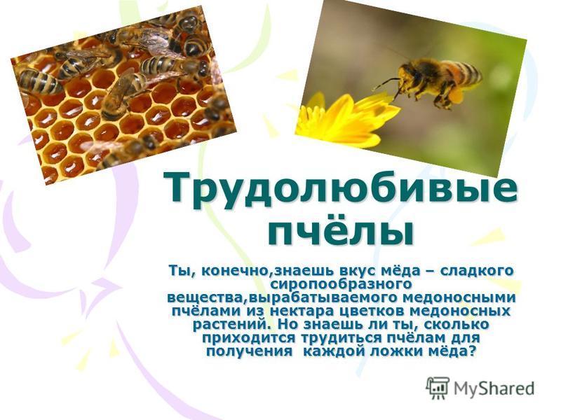 Трудолюбивые пчёлы Ты, конечно,знаешь вкус мёда – сладкого сиропообразного вещества,вырабатываемого медоносными пчёлами из нектара цветков медоносных растений. Но знаешь ли ты, сколько приходится трудиться пчёлам для получения каждой ложки мёда?