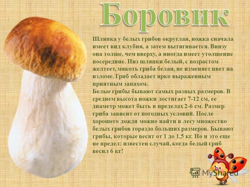 С ним в лесу никто не дружен, И в лукошке он не нужен. Мухи скажут: «Это мор!» В красной шляпке... На грибы она сердита И от злости ядовита. Вот лесная хулиганка! Это бледная...