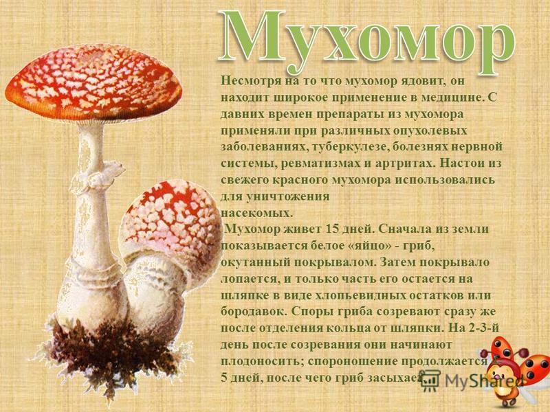 Сморчки - это самые первые весенние грибы. Шляпки сморчков всех видов неравномерно-ребристые, морщинистые, ноздреватые, напоминающие ядра очищенных грецких орехов. Ранней весной эти грибы встречаются практически повсеместно в сосновых и смешанных лес