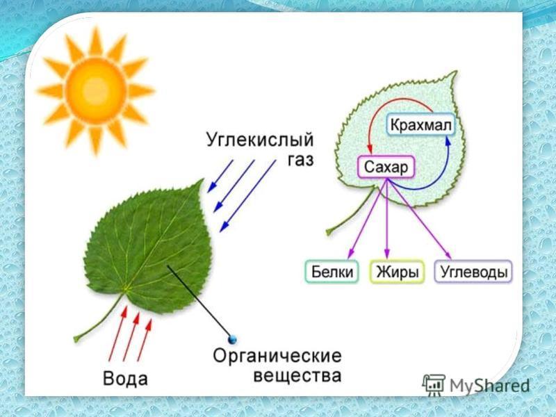 Фотосинтез («фото» - свет; « синтез» – образование)