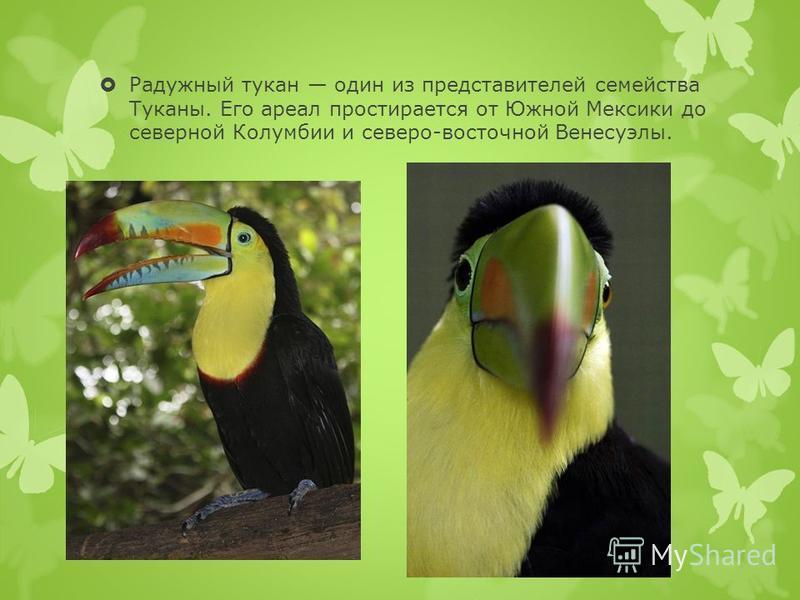 Радужный тукан один из представителей семейства Туканы. Его ареал простирается от Южной Мексики до северной Колумбии и северо-восточной Венесуэлы.