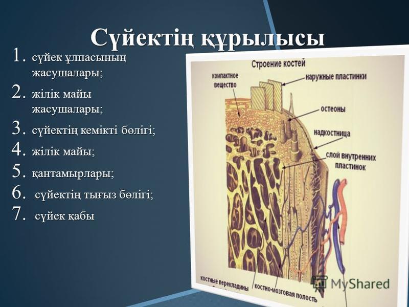 Сүйектің құрылысы 1. сүйек ұлпасының жасушалары; 2. жілік майы жасушалары; 3. сүйектің кемікті бөлігі; 4. жілік майы; 5. қантамырлары; 6. сүйектің тығыз бөлігі; 7. сүйек қабы