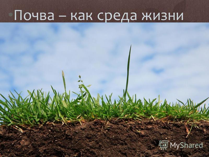 Почва – как среда жизни