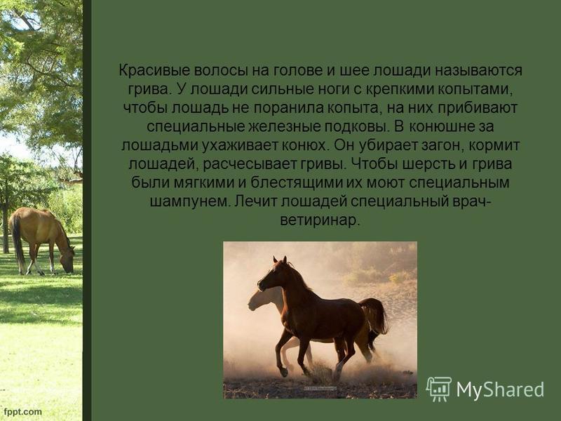 Красивые волосы на голове и шее лошади называются грива. У лошади сильные ноги с крепкими копытами, чтобы лошадь не поранила копыта, на них прибивают специальные железные подковы. В конюшне за лошадьми ухаживает конюх. Он убирает загон, кормит лошаде