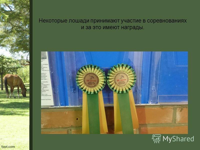 Некоторые лошади принимают участие в соревнованиях и за это имеют награды.