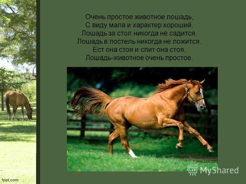 Очень простое животное лошадь, С виду мала и характер хороший. Лошадь за стол никогда не садится, Лошадь в постель никогда не ложится. Ест она стоя и спит она стоя. Лошадь-животное очень простое.