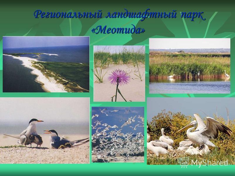 Региональный ландшафтный парк «Меотида»