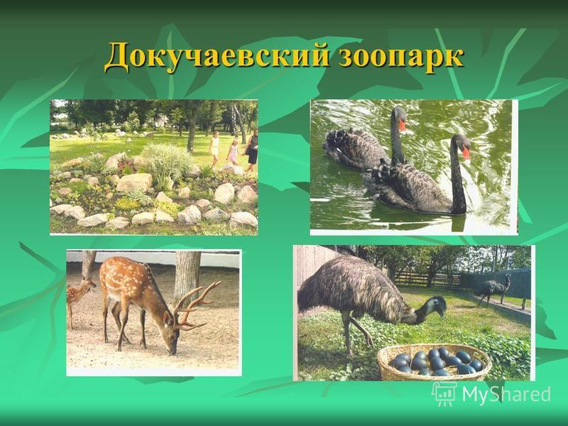 Докучаевский зоопарк