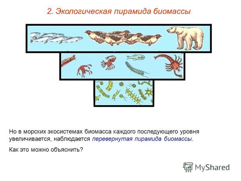 2. Экологическая пирамида биомассы Но в морских экосистемах биомасса каждого последующего уровня увеличивается, наблюдается перевернутая пирамида биомассы. Как это можно объяснить?