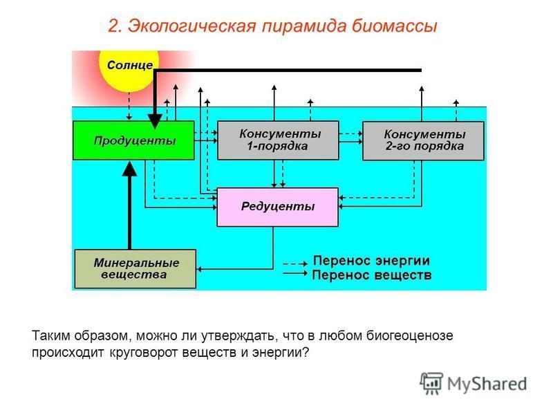 Таким образом, можно ли утверждать, что в любом биогеоценозе происходит круговорот веществ и энергии? 2. Экологическая пирамида биомассы