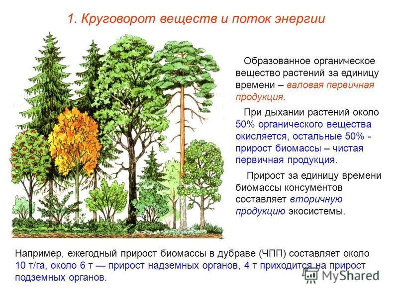 Образованное органическое вещество растений за единицу времени – валовая первичная продукция. При дыхании растений около 50% органического вещества окисляется, остальные 50% - прирост биомассы – чистая первичная продукция. Прирост за единицу времени