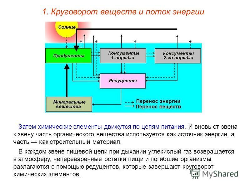 1. Круговорот веществ и поток энергии Затем химические элементы движутся по цепям питания. И вновь от звена к звену часть органического вещества используется как источник энергии, а часть как строительный материал. В каждом звене пищевой цепи при дых