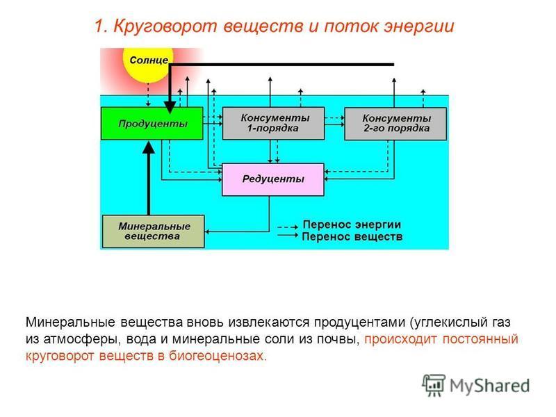 1. Круговорот веществ и поток энергии Минеральные вещества вновь извлекаются продуцентами (углекислый газ из атмосферы, вода и минеральные соли из почвы, происходит постоянный круговорот веществ в биогеоценозах.