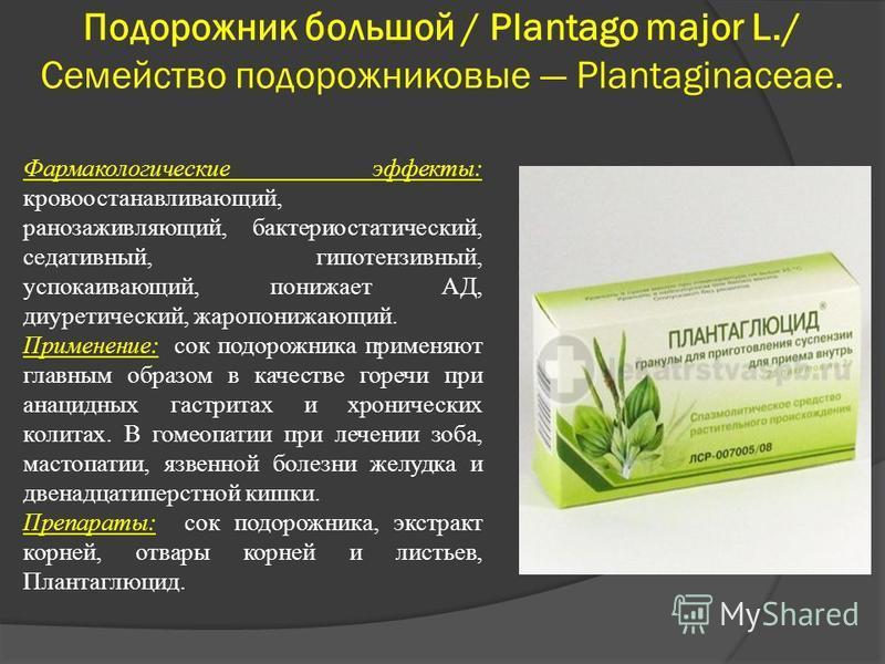 Подорожник большой / Plantago major L./ Семейство подорожниковые Plantaginaceae. Фармакологические эффекты: кровоостанавливающий, ранозаживляющий, бактериостатический, седативный, гипотензивный, успокаивающий, понижает АД, диуретический, жаропонижающ
