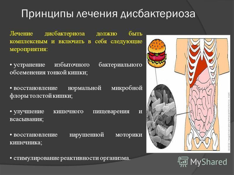 Презентация на тему Курсовая работа по фармакогнозии Тема  6 Принципы лечения дискбактериоза