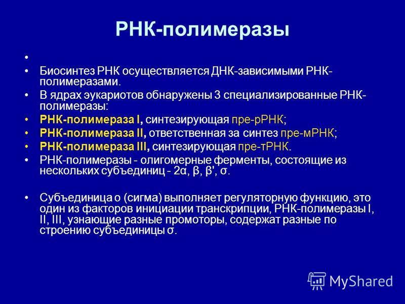 РНК-полимеразы Биосинтез РНК осуществляется ДНК-зависимыми РНК- полимеразами. В ядрах эукариотов обнаружены 3 специализированные РНК- полимеразы: РНК-полимераза I, синтезирующая пре-рРНК; РНК-полимераза II, ответственная за синтез пре-мРНК; РНК-полим