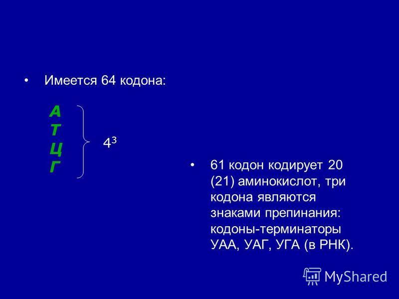 Имеется 64 кодона: 61 кодон кодирует 20 (21) аминокислот, три кодона являются знаками препинания: кодоны-терминаторы УАА, УАГ, УГА (в РНК). АТЦГАТЦГ 4 3