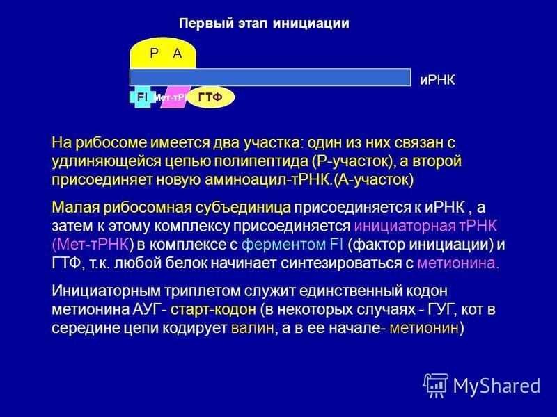 Первый этап инициации FI иРНК Мет-тРНК На рибосоме имеется два участка: один из них связан с удлиняющейся цепью полипептида (Р-участок), а второй присоединяет новую аминоацил-тРНК.(А-участок) Малая рибосомная субъединица присоединяется к иРНК, а зате