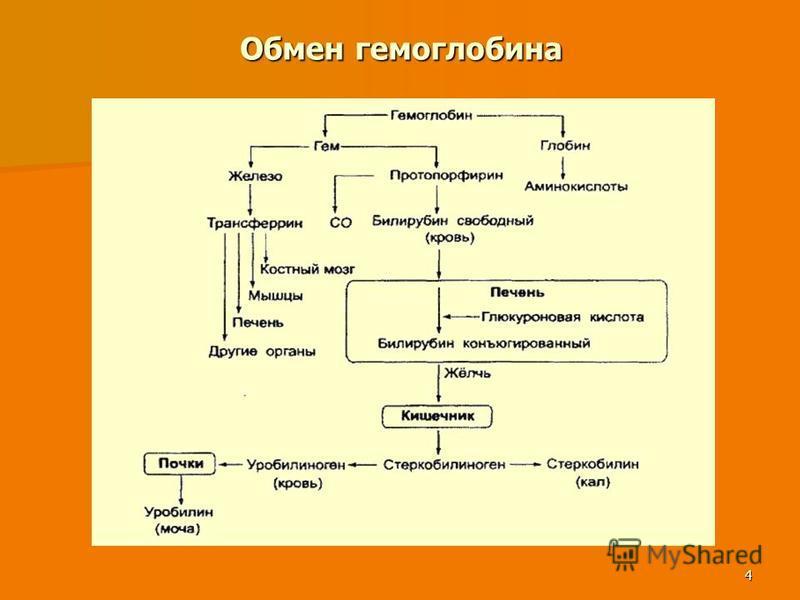 4 Обмен гемоглобина