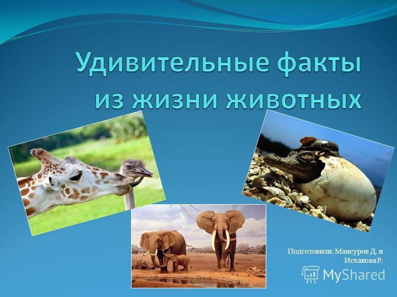 Подготовили: Мансуров Д. и Исхакова Р.