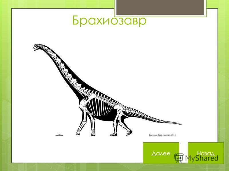 Брахиозавр Далее Назад