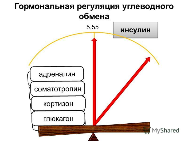 глюкагон кортизон соматотропин адреналин инсулин глюкагон кортизон соматотропин адреналин Гормональная регуляция углеводного обмена 5,55