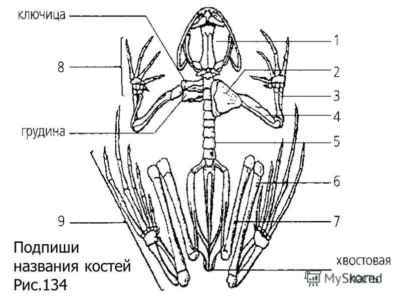 Подпиши названия костей Рис.134
