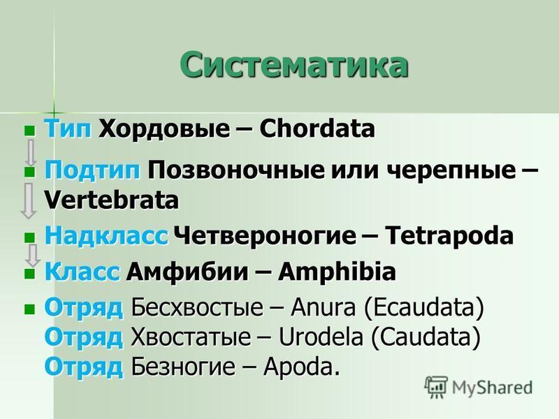 Систематика Тип Хордовые – Chordata Тип Хордовые – Chordata Подтип Позвоночные или черепные – Vertebrata Подтип Позвоночные или черепные – Vertebrata Надкласс Четвероногие – Tetrapoda Надкласс Четвероногие – Tetrapoda Класс Амфибии – Amphibia Класс А