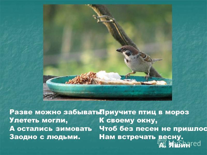 Разве можно забывать: Улететь могли, А остались зимовать Заодно с людьми. Приучите птиц в мороз К своему окну, Чтоб без песен не пришлось Нам встречать весну. А. Яшин