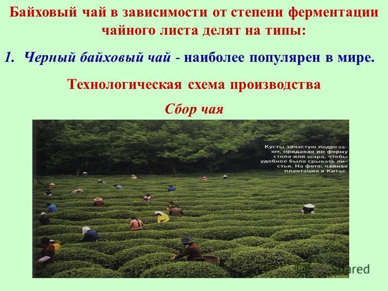 Байховый чай в зависимости от степени ферментации чайного листа делят на типы: 1. Черный байховый чай - наиболее популярен в мире. Технологическая схема производства Сбор чая