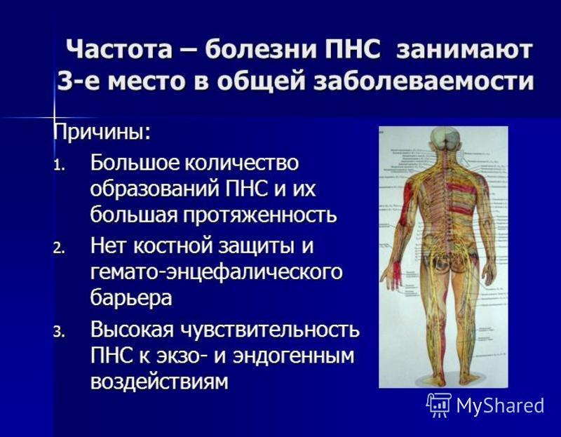Частота – болезни ПНС занимают 3-е место в общей заболеваемости Частота – болезни ПНС занимают 3-е место в общей заболеваемости Причины: 1. Большое количество образований ПНС и их большая протяженность 2. Нет костной защиты и гемато-энцефалического б