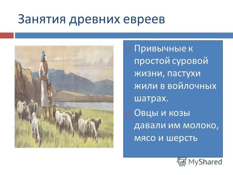 Занятия древних евреев Привычные к простой суровой жизни, пастухи жили в войлочных шатрах. Овцы и козы давали им молоко, мясо и шерсть