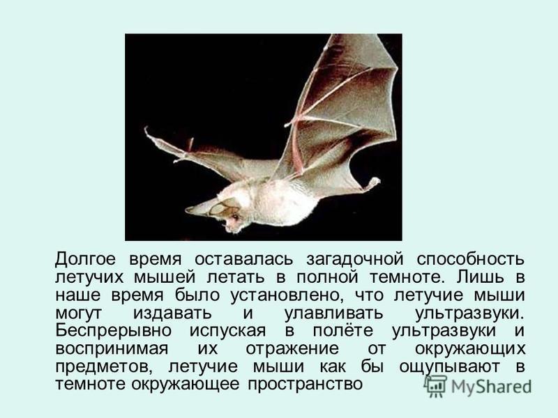 Долгое время оставалась загадочной способность летучих мышей летать в полной темноте. Лишь в наше время было установлено, что летучие мыши могут издавать и улавливать ультразвуки. Беспрерывно испуская в полёте ультразвуки и воспринимая их отражение о