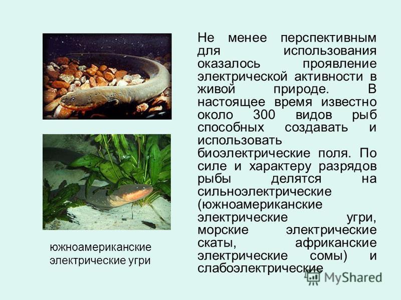 Не менее перспективным для использования оказалось проявление электрической активности в живой природе. В настоящее время известно около 300 видов рыб способных создавать и использовать биоэлектрические поля. По силе и характеру разрядов рыбы делятся