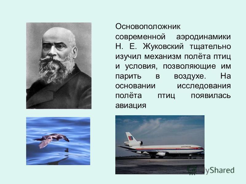 Основоположник современной аэродинамики Н. Е. Жуковский тщательно изучил механизм полёта птиц и условия, позволяющие им парить в воздухе. На основании исследования полёта птиц появилась авиация