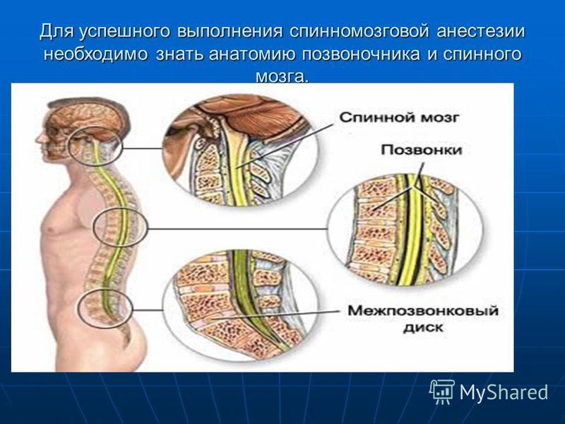 Для успешного выполнения спинномозговой анестезиии необходимо знать анатомию позвоночника и спинного мозга.