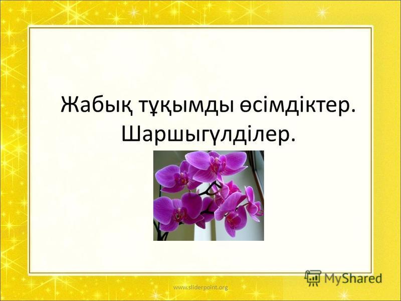 Жабық тұқымды өсімдіктер. Шаршыгүлділер. www.sliderpoint.org