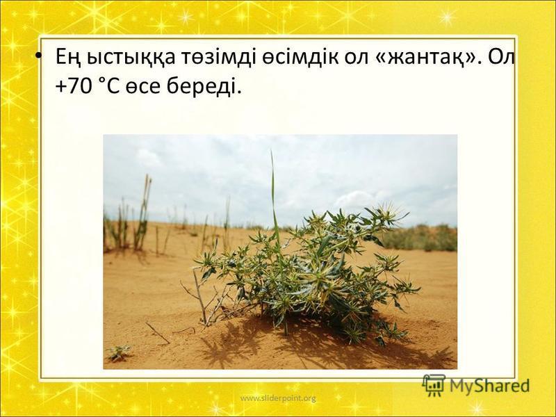 Ең ыстыққа төзімді өсімдік ол «жантақ». Ол +70 °С өсе береді. www.sliderpoint.org